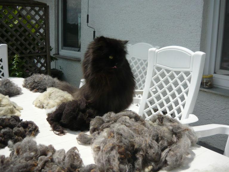 Wollproben und Katze